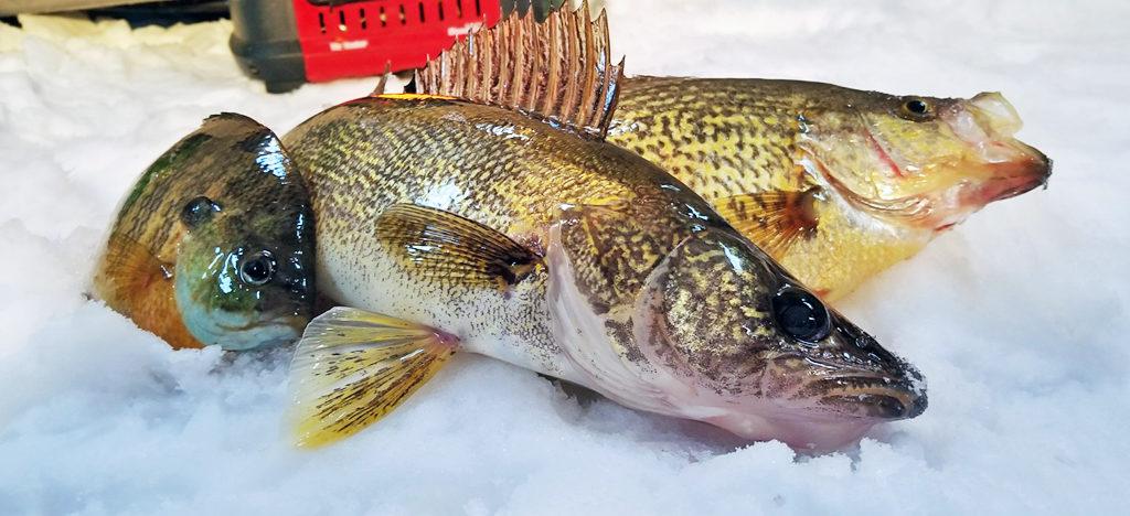 otc web home header fishing1